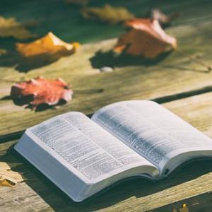 読書が苦手・嫌いな人必見!読書好きになるためのたった1つのポイントについて!