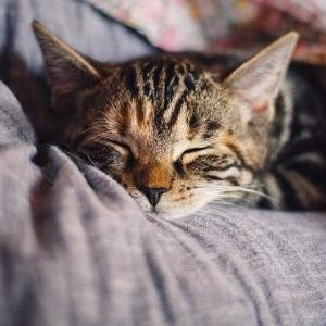 【常に眠い…】眠りが浅い原因と対策について考える!【睡眠障害】
