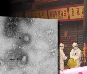 新型コロナウイルス、国内で4例目