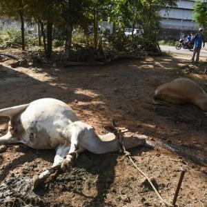 インドの韓国LG工場で大事故、猛毒ガスが漏れて大惨事