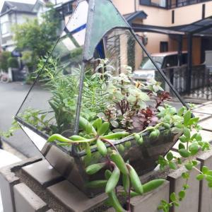 【メルカリ】で多肉植物のカット25種380円を買ってみた。