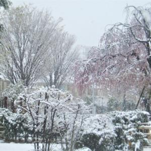 雪景色になった。今日はマリモの日