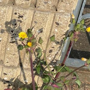 根性花、今日はヘアカットの日