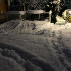 久しぶりに除雪13cm、軽くてきれいな雪だった。
