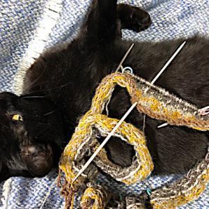 フィンランド毛糸で古典模様、模様二つ目リリー撮影台、膝乗りを覚えたらしい