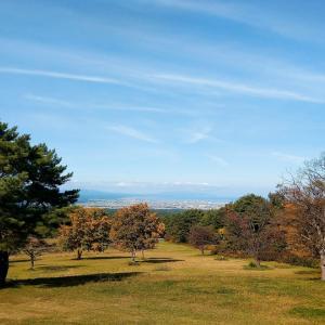 合子沢記念公園から近所の溜池 / コゲラ&カワセミとミサゴ