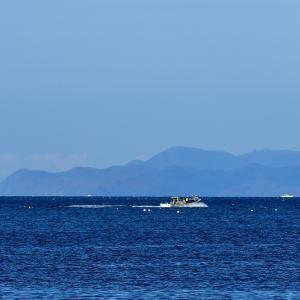 久方ぶりに油川港で冬鳥の定点観測 / ウミアイサとカワアイサ