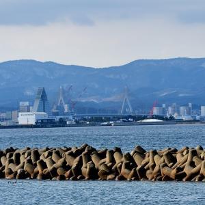 好天も青森港は鳥影薄い / 撮れたのは原別港のコクガンとミミカイツブリ