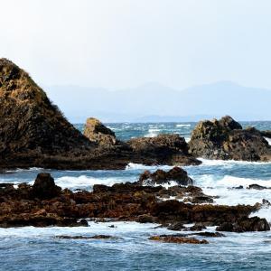 強風の夏泊半島 / 冬になると海岸で暮らすシノリガモ