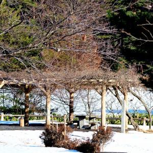 快晴の野木和公園 / ちょい悪親父風貌のカケス&青空を帆翔するハイタカ