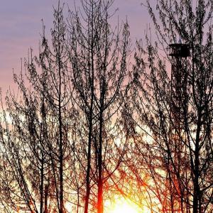 朝・昼・午後と続けて鳥撮り / カイツブリ、キセキレイ、カワセミなど