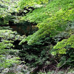 早起きして眺望山、カメラを抱えて川沿いを散策 / 久しぶりに撮ったオオアカゲラ