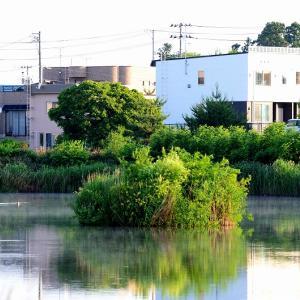 夏枯れの笹森池 / それでもオオヨシキリだけは仰々しい