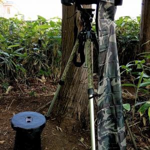 近所の堤で三脚据えて待機も / 撮れたのはオオヨシキリ