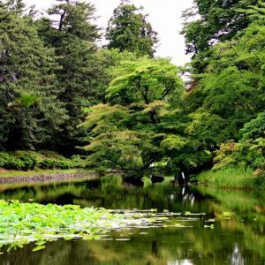 一年ぶりの弘前公園で鳥撮り / もちろん狙いはカワセミです