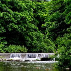 青森市東部の野内川で鳥撮り / カワガラスとカワセミ