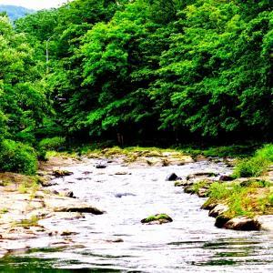 野内川の上流域で / 初撮りの鮎の滝登り