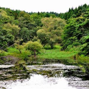 久しぶりに野木和公園を探鳥散策 / 撮れたのは黄色い嘴のイカル(桑鳲)