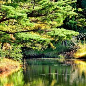 天気は良かったが何処も鳥影薄い / 野木和公園でヤマガラとヒガラ