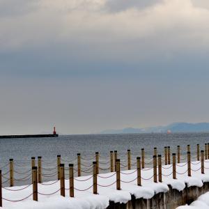 フェリー埠頭から油川港、そして野木和で / イソヒヨドリ、ユリカモメ、ツグミ、ウソなど