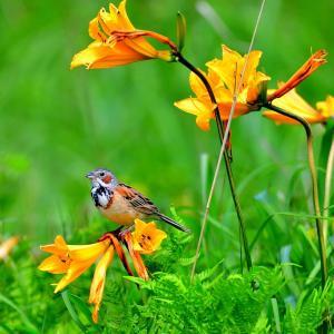 一年ぶりのベンセ湿原で三脚担いで鳥撮りした /