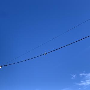 電線にスズメが三羽止まったら