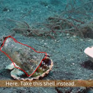 海に棄てられた「プラスチックに住むタコ」を助けた動画 海外の反応