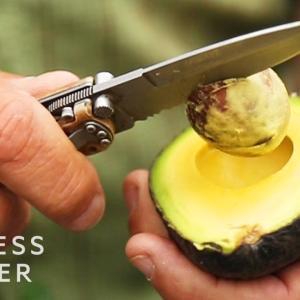 「庭の木でビジネスを始めよう」アボカドの値段が高い理由とは?