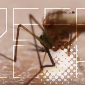 蚊が血を吸うのに使う「6本の針」の秘密 海外の反応