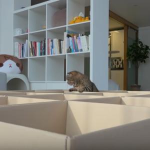 ネコが沢山いるので段ボール箱で遊び場を作ってみた 海外の反応