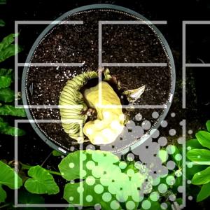 植物なのに生肉みたいで、ネズミの死骸の匂いがする花…?  海外の反応