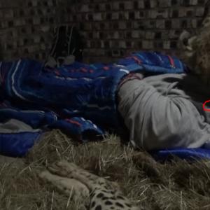 チーターに背中を向けると...、そして一緒に寝ると…!?  海外の反応