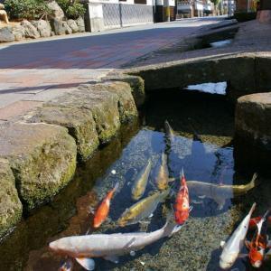 日本の人工水路が美しく鯉もいると話題に 海外の反応