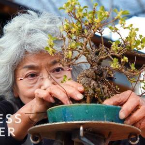 「元々こういう形だと思ってた」盆栽はなぜ高価なのか? 海外の反応