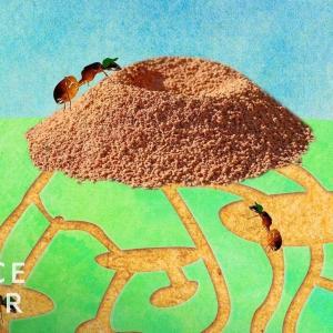 アリの巣の中はどうなっているのか? 海外の反応