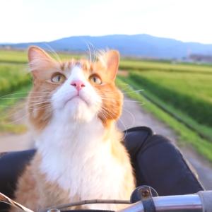 猫が礼儀正しくお手をする動画が可愛くて癒される 海外の反応