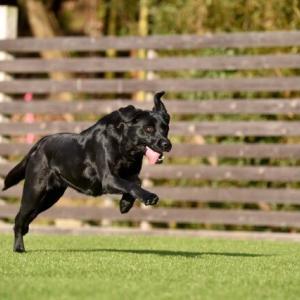 【感動】ある日山へ散歩に出かけると3匹の大型犬が放置されていた… 海外の反応