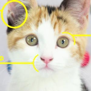 【BBC】猫の気持ちを読み解く方法 海外の反応