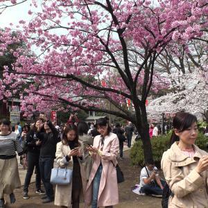 韓国が~もよろしいですがたまには→「平和」しかない!隅田川ほとりの満開の桜と清々しい街並みの風景「言葉はいらない!景色だけで日本が好きになる!」海外の反応