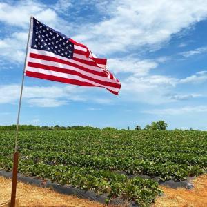 アメリカの国歌を歌った韓国人VS日本人の歌手を見てショックを受けたアメリカ海兵隊の反応「礼儀に反する」「低俗なエチケット」海外の反応