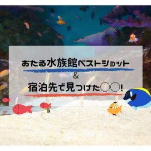 *おたる水族館ベストショット&宿泊先で見つけた◯◯!*