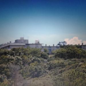 奄美大島笠利、2002年8月(当時)のキノボリトカゲ、動画編。