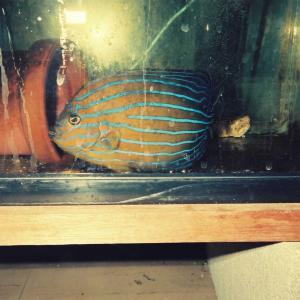 自宅の1海水魚水槽、1993年当時、動画主体。