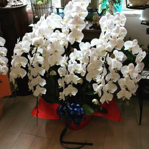 胡蝶蘭お祝いマナー|知っていると便利です!