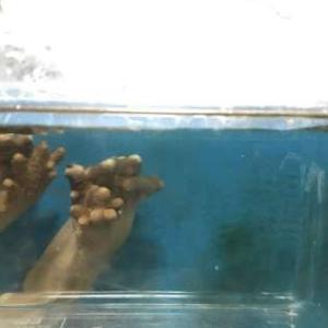 【稚魚を育てよう!】孵化!第一弾!!