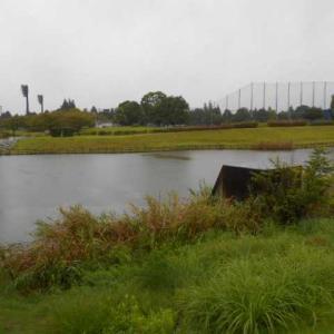 8-15 公園池