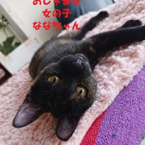 10/14 参加ネコを紹介します!②