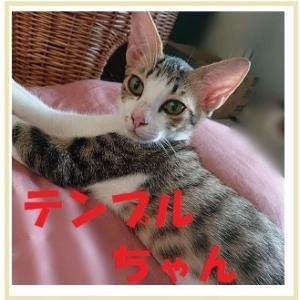 10/14 参加ネコを紹介します!④