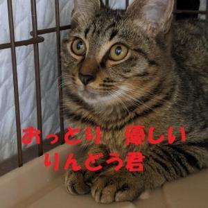 10/14 参加ネコを紹介します!③