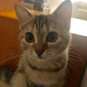 10/14参加ネコを紹介します⑩